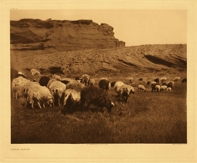 portfolio 1 plate no. 33 Navaho flocks