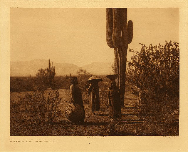 portfolio 2 plate no. 69 Saguaro fruit-gatherers - Maricopa