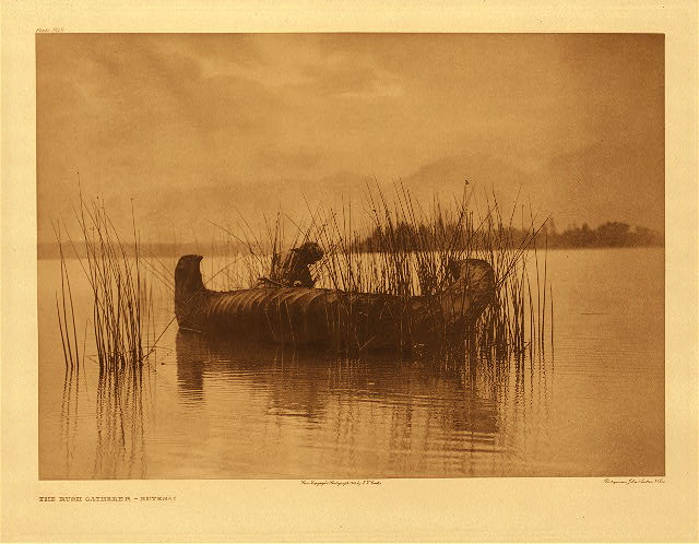 portfolio 7 plate no. 255 Rush gatherer &ndash; Kutenai
