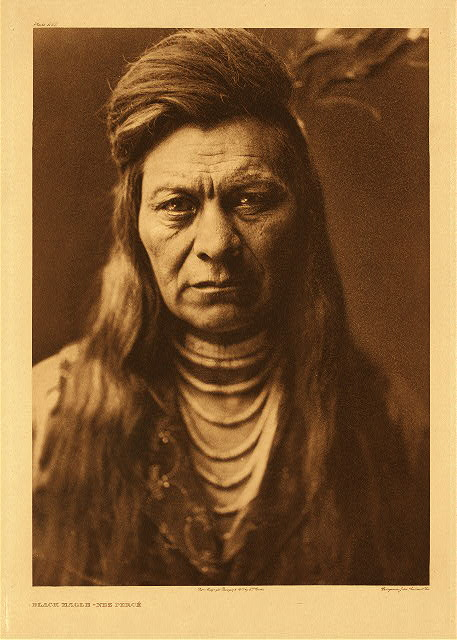 portfolio 8 plate no. 265 Black Eagle - Nez Perce