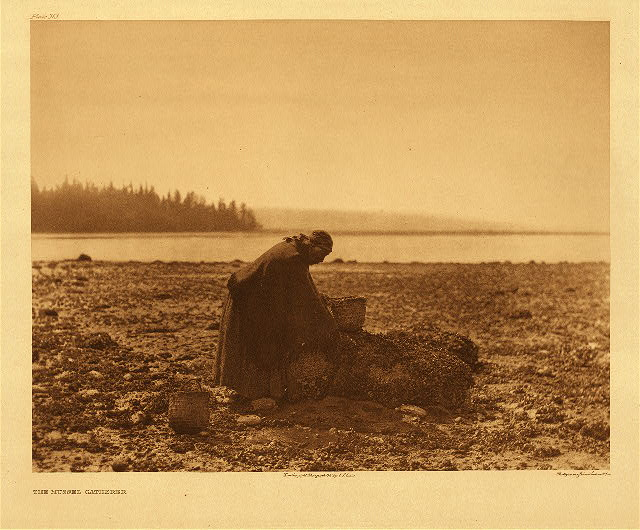 portfolio 9 plate no. 313 Mussel gatherer