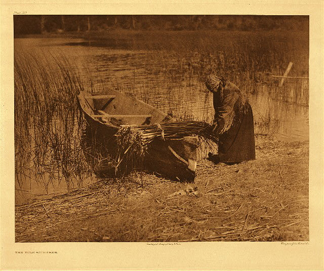 portfolio 9 plate no. 315 Tule gatherer &ndash; Cowichan
