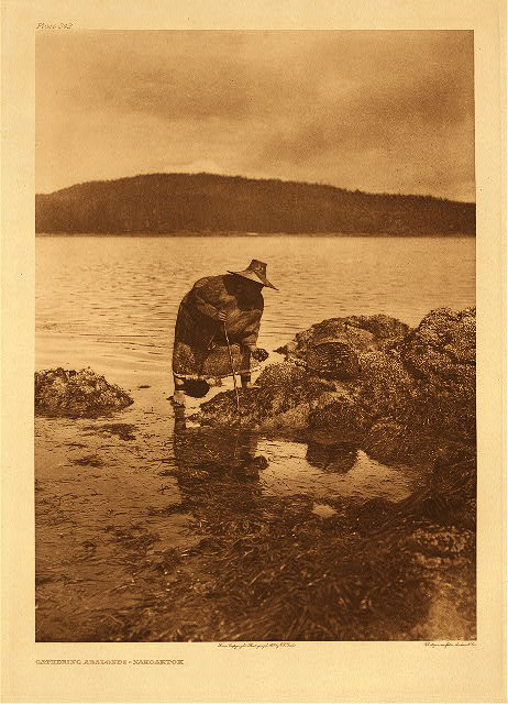 portfolio 10 plate no. 342 Gathering abalones &ndash; Nakoaktok
