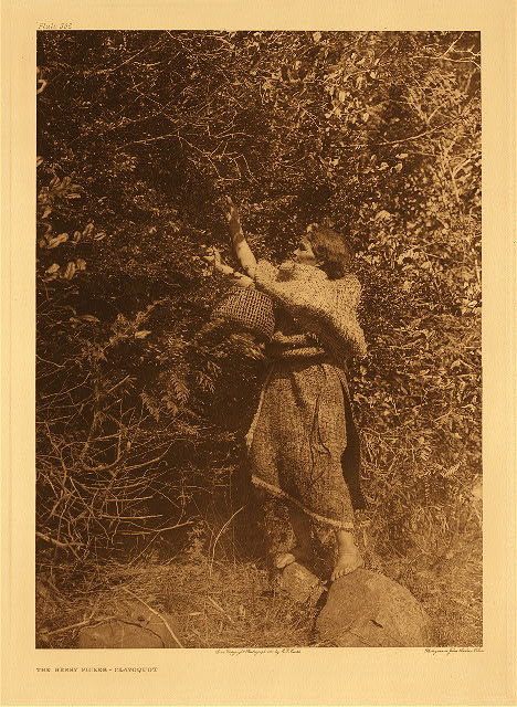 portfolio 11 plate no.368  Berry-picker &ndash; Clayoquot
