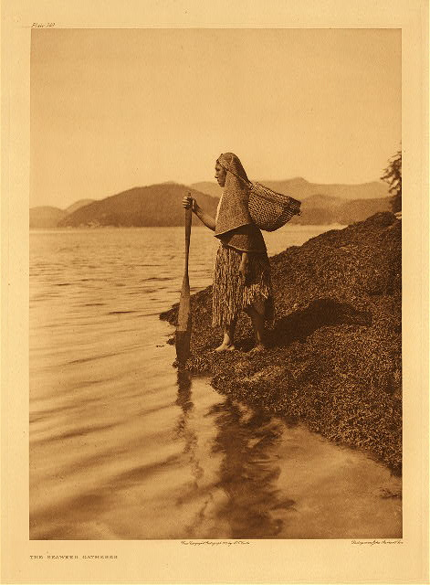 portfolio 11 plate no. 369 Berry-picker – Clayoquot