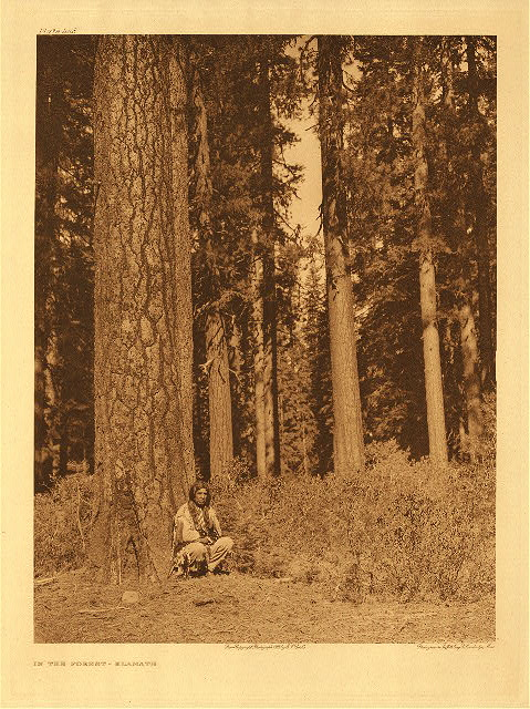 portfolio 13 plate no. 448 In the forest – Klamath