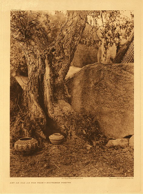 portfolio 14 plate no. 499 Art as old as the tree - southern Yokuts
