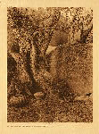 portfolio 14 plate no. 499 Art as old as the tree - southern Yokuts - photogravure plate