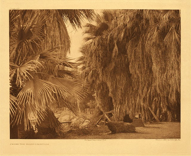 portfolio 15 plate no. 521 Under the palms – Cahuillai