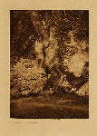 volume 1 facing: page  xiv By the sycamore - Apache - photogravure plate