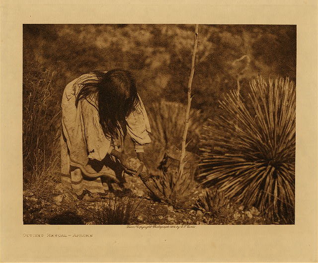 volume 1  facing: page  16 Cutting mescal - Apache