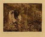 volume 1 facing: page  16 Cutting mescal - Apache - photogravure plate