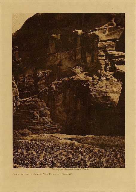 volume 1  facing: page  74 Cornfields in Ca&ntilde;on del Muerto - Navaho
