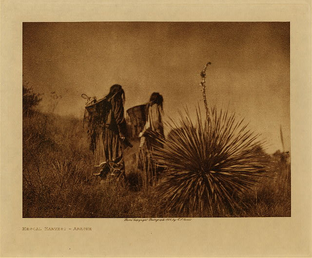 volume 1  facing: page  128 Mescal harvest - Apache