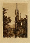 volume 2 facing: page  4 Gathering cactus fruit - Pima - photogravure plate