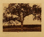 volume 4 facing: page  188 The mythic tree - photogravure plate