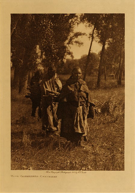 volume 6  facing: page  76 Wood-gatherers - Cheyenne