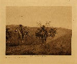 volume 6 facing: page  96 Return with boughs - Cheyenne - photogravure plate