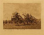 volume 6 facing: page  98 Boughs for the altar - Cheyenne - photogravure plate