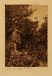 volume 9 Frontispiece In the forest - Quinault - photogravure plate