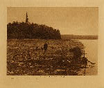 volume 9 facing: page  56 Digging clams - Puget Sound - photogravure plate