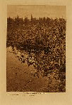 volume 9 facing: page  112 Tule gatherers - Puget Sound - photogravure plate