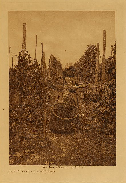 volume 9  facing: page  134 Hop pickers - Puget Sound