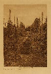 volume 9 facing: page  134 Hop pickers - Puget Sound - photogravure plate
