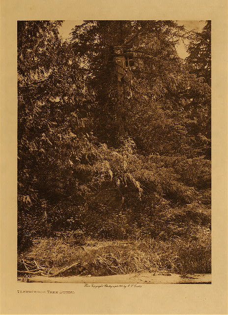 volume 10  facing: page  54 Tsawatenok tree burial