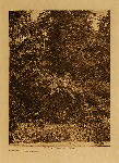 volume 10 facing: page  54 Tsawatenok tree burial - photogravure plate