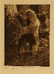 volume 11 facing: page  94 The bear costume - Nootka - photogravure plate