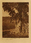 volume 14 facing: page  88 Camp under the oaks - Lake Pomo - photogravure plate