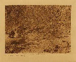 volume 15 facing: page  32 Remains of ancient fish-pounds - B - photogravure plate
