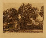 volume 15 facing: page  114 Modern houses at Palm Springs - Cahuilla - photogravure plate