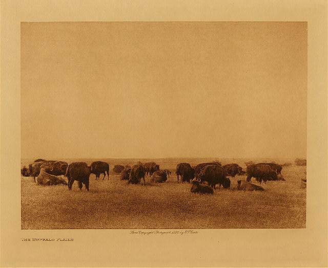 volume 19  facing: page  60 The buffalo plains