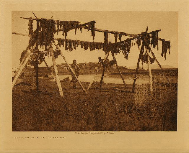 volume 20  facing: page  94 Drying whale meat, Hooper Bay