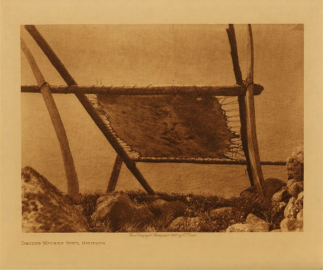 volume 20  facing: page  124 Drying walrus hide, Diomede