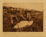 volume 20 facing: page  172 Cutting up a beluga, Kotzebue - photogravure plate
