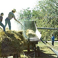 Old-fashioned rice threshing, 1980 Rice Festival