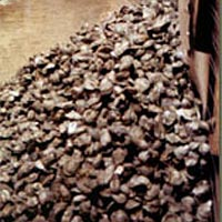 Pile of shucked oyster shells, Feb. 1999
