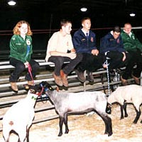 4-H and FFA members prepare to exhibit their sheep