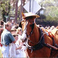 Horse in bonnet, Easter Parade