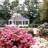 Dogwoods and azaleas in bloom on town commons for 1999 Festival