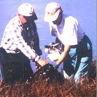 """River Star"" volunteers help restore shoreline at Portsmouth, VA, spring 1999"
