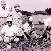 Early Turbeville growers