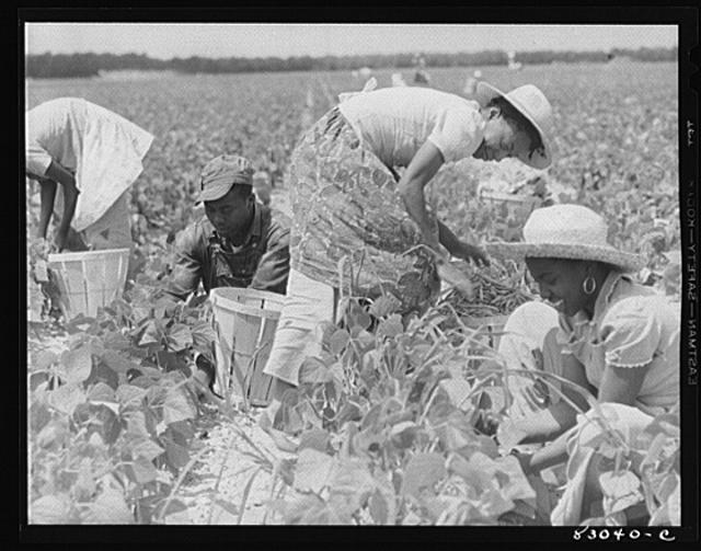 an analysis of the life of migrant american laborers 2016-5-11 laborers were leaving as she arrived, for late-winter  learned her name, or that she was a full-blooded american indian raised in oklahoma, in the indian territory of the cherokee nation  migrant mother, 1936 18-b dorothea lange (1895–1965), migrant mother (destitute.