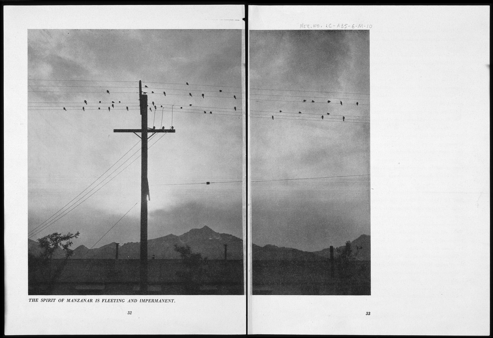 suffering under a great injustice ansel adams s photographs of  photograph from a distance of birds perched on wires