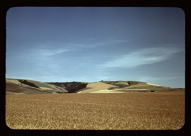Image, Source: digital file from original slide