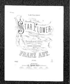 The  Star Flower - Sternblume