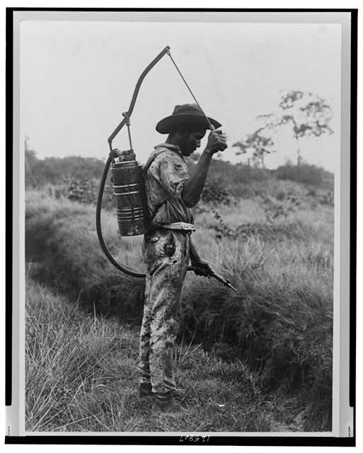 Panama - Spraying oil on breeding place of mosquitoes, 1890-1925